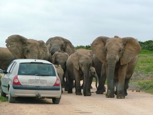 Selber im Addo Park auf Safari gehen